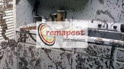 Kelebihan Inspeksi Rayap REMAPEST