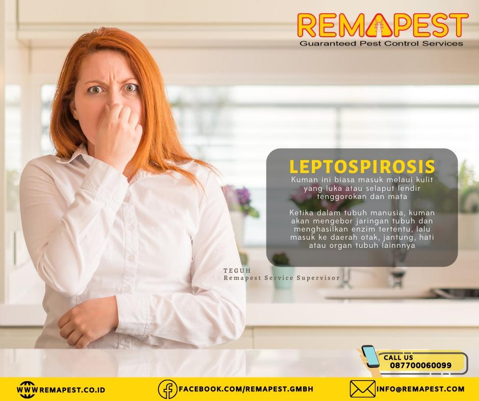 Penyakit yang ditimbulkan dari bangkai hewan mamalia tersebut berupa leptospirosis disebabkan oleh kuman Leptospira dari tikus mati.