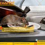 RODEAD – Basmi Tikus ramah lingkungan